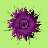 Flieder, purpurrote Pfingstrosenblume Lizenzfreie Stockfotografie