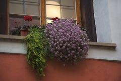 Flieder, rosa Heide, rote Pelargonie blüht und grüner Farn verlässt stockfoto