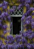 Flieder um ein Fenster lizenzfreie stockfotos