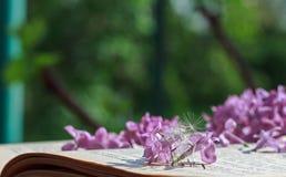 Flieder- und Löwenzahnflaum, der auf einem offenen alten Buch liegt stockfotografie