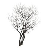 Fliederbuschschattenbild im Winter Lizenzfreie Stockbilder