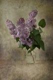 Fliedern in der Blüte Stockbild