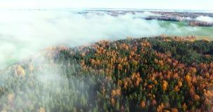 Fliege über dem farbigen Herbstwald mit Nebel stock video
