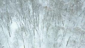 Fliege über schneebedecktem Park stock footage