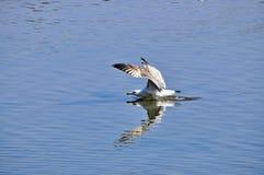 Fliege über See Lizenzfreie Stockbilder