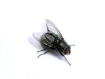 Fliege 1 Lizenzfreies Stockbild