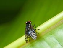 Fliege stockfoto