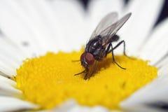 Fliege 2 Stockbilder