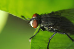 Fliege Stockbild