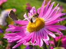 Fliege 3 lizenzfreies stockfoto