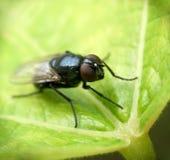 Fliege ...... (5) Stockbilder