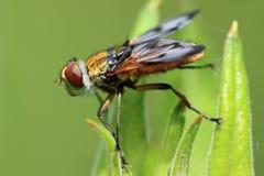 Fliege 3 Stockbilder