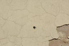 Fliege auf alter gemalter Wand Stockfotos