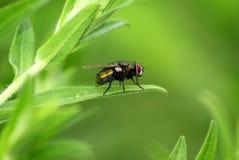 Fliege auf Blatt Lizenzfreies Stockfoto