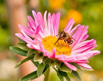 Fliege auf Blume Stockbild