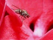 Fliege auf Blume Lizenzfreie Stockfotos
