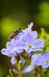 Fliege auf Blumen Stockfoto