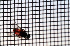 Fliege auf dem Windbildschirm Stockbild