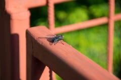 Fliege auf dem Zaun lizenzfreie stockbilder