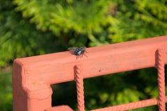 Fliege auf dem Zaun stockfotos