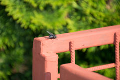 Fliege auf dem Zaun stockfotografie