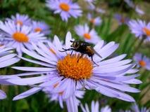 Fliege auf der Blume Stockfotografie