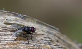 Fliege auf einem Blatt Lizenzfreies Stockfoto