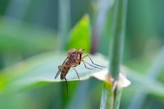 Fliege auf einem Blatt Lizenzfreies Stockbild