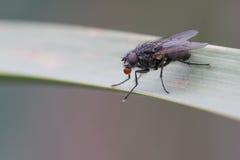 Fliege auf einem Blatt Stockfotos