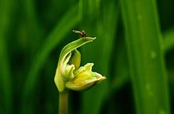 Fliege auf einem Blumenblumenblatt Stockfotografie