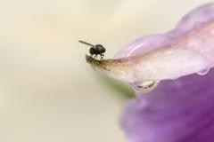 Fliege auf einem nassen Blumenblumenblatt Stockfotos