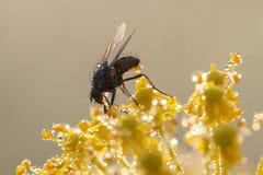Fliege auf einer Anlage Lizenzfreies Stockbild