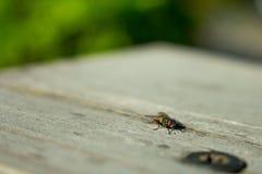 Fliege auf einer Tabelle beim draußen kampieren Lizenzfreie Stockfotografie