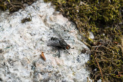 Fliege auf Felsen Stockbilder