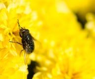 Fliege auf gelben Blumen Lizenzfreie Stockfotografie