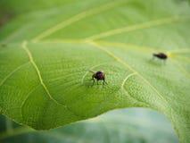 Fliege an auf grünem Blatt Stockbilder