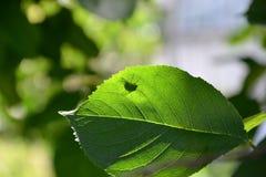 Fliege auf grünen Blattanlagen Stockbilder