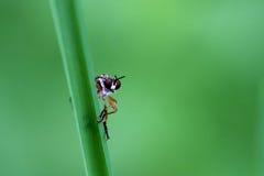 Fliege auf Gras Stockfotografie