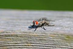 Fliege auf Holz stockbilder