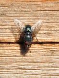 Fliege auf Holz Stockfotos