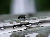 Fliege auf Holz Stockfoto