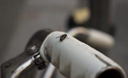 Fliege auf Lenkstange Lizenzfreies Stockbild