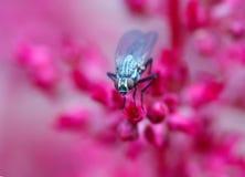 Fliege auf roten Blumen Lizenzfreies Stockfoto