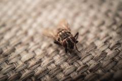 Fliege auf Wolle Lizenzfreie Stockbilder