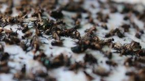 Fliege in der Kleberfalle stock footage