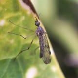 Fliege, die auf einem Blatt stillsteht Lizenzfreie Stockbilder