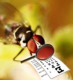 Fliege, die einen Sehtest unter Verwendung einer Lupe hat Lizenzfreie Stockfotografie