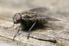 Fliege gehockt auf Holz Stockfotografie