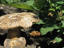 Fliege gesessen unten auf einem Pilz Stockfotografie