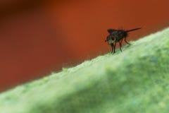 Fliege gren an und orange Hintergrund Stockfoto